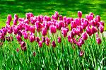 Keukenhof Gardens, Lisse, The Netherlands