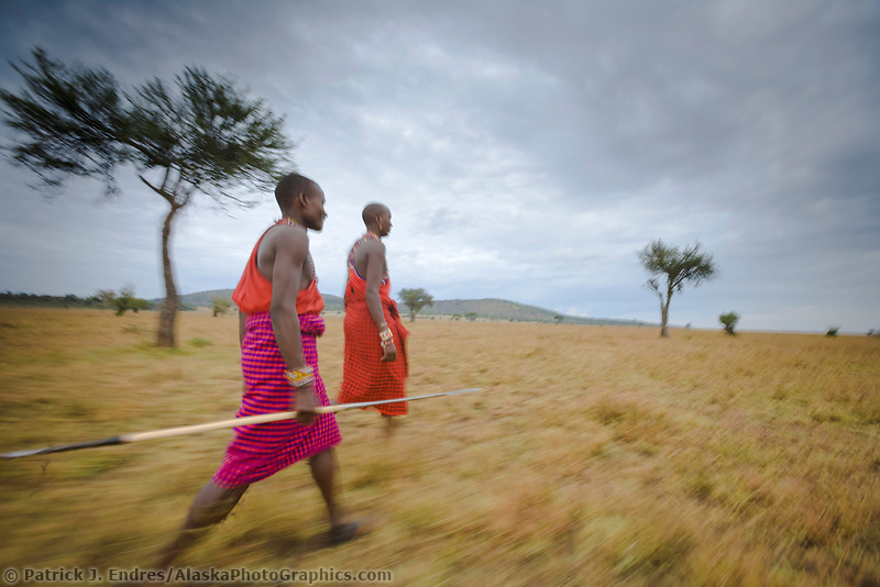 Two Masai tribesman at dawn hunt on the savannah in the Masai Mara, Kenya, Africa