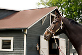 USA, Tennessee, Nashville, Iroquois Steeplechase, racehorse in front of a barn