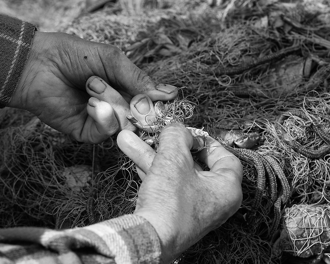 A local fisherman untangles his net to reveal his catch of crab early in the day, Venice, Italy.