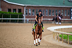 LOUISVILLE, KENTUCKY - MAY 01: Country House prepares for the Kentucky Derby at Churchill Downs in Louisville, Kentucky on May 01, 2019. Evers/Eclipse Sportswire/CSM