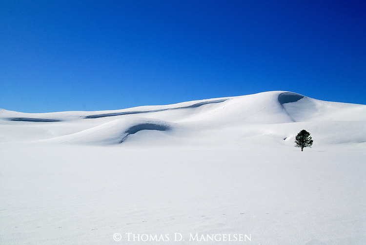 A single tree stands in the snow blanketed Hayden Valley in Yellowstone National Park, Wyoming.