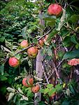 8.13.17 - Low-hanging Fruit...