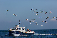 Royaume-Uni, îles Anglo-Normandes, île de Sark (Sercq)/ Bateau de pêche // United Kingdom, Channel Islands, Sark Island (Sercq): Fishing boat