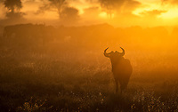 We had an amazing sunrise in Ndutu, complete with wildebeest and zebras.