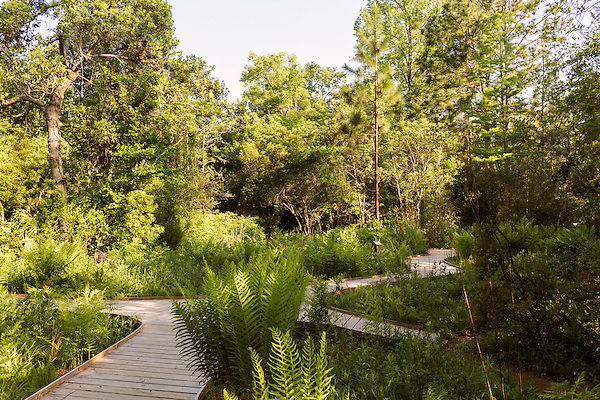 May 8, 2015. Chapel Hill, North Carolina.<br />  The North Carolina Botanical Gardens encompass acres of plant habitats native to the state, as well nature trails for walking and recreation. <br />  Outsiders tend to lump Chapel Hill with nearby Durham, but the more sensible pairing is with Carrboro, the adjacent town that was once a mere offshoot known as West End. Even today the transition from Chapel Hill, anchored by North Carolina''s flagship public university, into downtown Carrboro is virtually seamless.