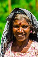 Women picking tea, Pussellawa, Central Province, Sri Lanka.