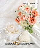 Alfredo, FLOWERS, BLUMEN, FLORES, photos+++++,BRTOLMN48013,#f#, EVERYDAY