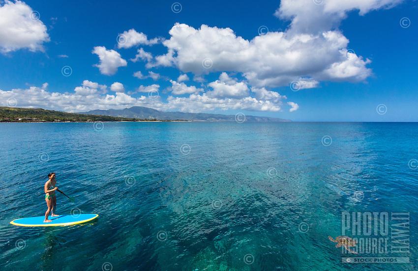 A standup paddler stops near a honu (green sea turtle) in the calm waters of Waimea Bay, O'ahu.