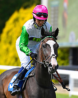 Four Feet ridden by Emma Taff goes down to the start of The M J Church Novice Stakes during Horse Racing at Salisbury Racecourse on 15th August 2019