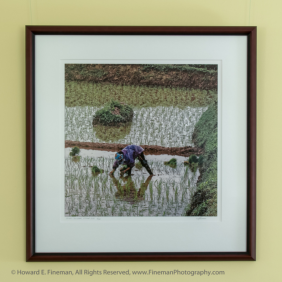 "Woman planting rice in paddy along the highway between Hanoi and Ha Long Bay. The rice in the north is less lush and plentiful than in mid-country and the south. This print was selected for the Newton Open Studios ""Invitational"" showcasing work of artists who previously received top juror awards."