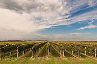 &quot;Grape Farm&quot;<br />
