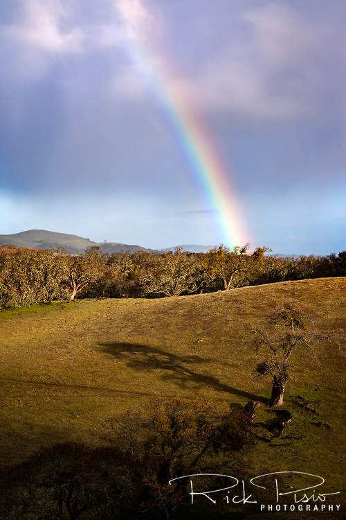 A rainbow rises above the blue oak trees at the Morgan Territory Regional Preserve in California's Contra Costa County.