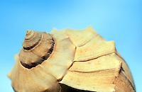 Mollusk shell.