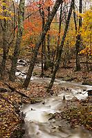 Creek, Shenandoah NP, VA