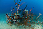 Dead black coral overgrown with sponges and other marine life.