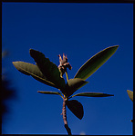 26 FEBRUARY  2003 - Palm Beach, Florida - At the Pan Garden's in Downtown Palm Beach a Flower considered local flora for Florida soaks up the sun. .