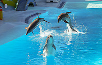 Delfinshow im Stadion Sam im Vergnügungspark Zoomarine - 25.09.2019: Zoomarine Park, Guia, Albufeira an der Algarve