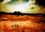 Three black birds in a barren landscape