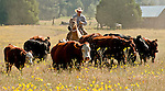 Cowboy Photography Workshop   Erickson Cattle Co. .. Photo by Al Golub/Golub Photography