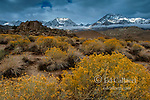Rabbitbrush, The Buttermilks, Mount Humphries, Basin Mountain, Mount Tom, Bishop Creek National Recreation Area, Inyo National Forest, California