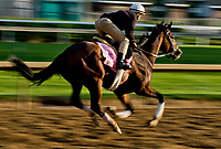 LOUISVILLE, KENTUCKY - May 02: Paradise Woods exercises on the track during Kentucky Derby and Oaks preparations at Churchill Downs on April 30, 2017 in Louisville, Kentucky. (Photo by Scott Serio/Eclipse Sportswire/Getty Images)