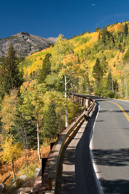 fall, color, aspen, Populus tremuloides, trees, forest, mountains, autumn, morning, scenic, Bear Lake Road, Rocky Mountain National Park, Colorado, Rocky Mountains, USA