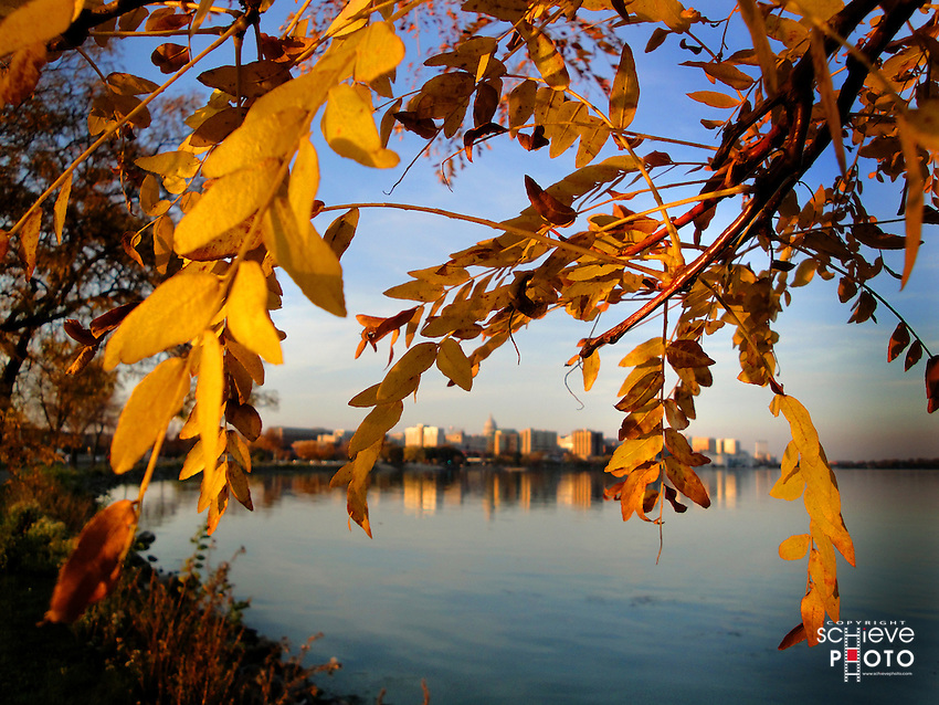 Fall leaves frame Madison, Wisconsin's skyline.
