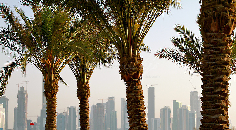 West Bay Skyscrapers behind the palm trees, Doha, Qatar | Mar 10