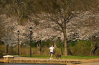 A jogger and dog run among the flowering trees in Freedom Park in Charlotte, NC.