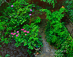 Garden Path, Cypress Avenue Garden, Mill Valley, California