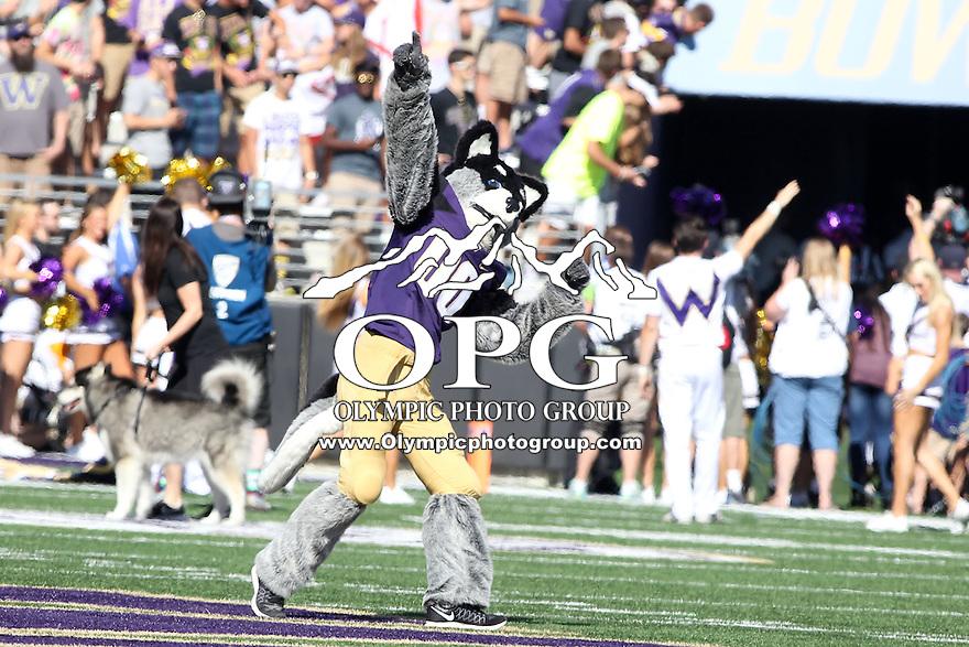 SEP 12, 2015:  University of Washington mascot Harry vs Sacramento State at Husky Stadium in Seattle, Washington. Washington won 49-0 over Sacramento State.