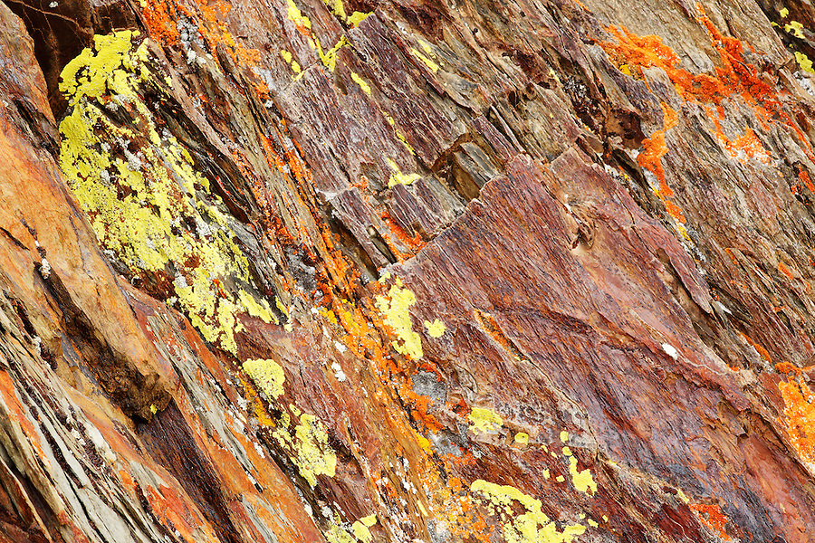 Lichen on rocks, Inyo National Forest, White Mountains, California, USA