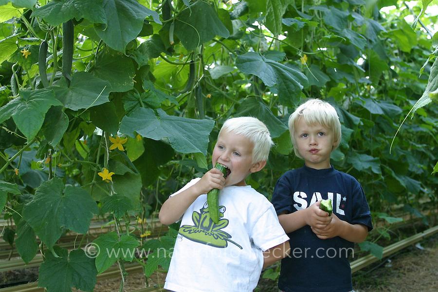 Bio-Bauernhof, Biohof, Bauernhof, Kinder essen Gurken direkt von der Pflanze, Gurken-Anbau im Gewächshaus, Gurke, Cucumis sativus, Cucumber, Gherkin, Concombre