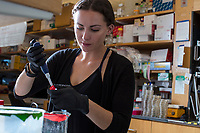 Undergraduate research assistant Elana Lockshin prepares buffer solutions for calibrating equipment in George Church's Lab in the New Research Building at Harvard Medical School's Department of Genetics in Boston, Massachusetts, USA, on Tues., Sept. 5, 2017.