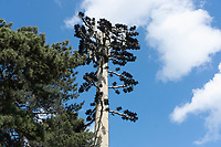 22.5.2020 Telecommunications mast in a field <br /> ©Tim Scrivener Photographer 07850 303986<br />      ....Covering Agriculture In The UK....