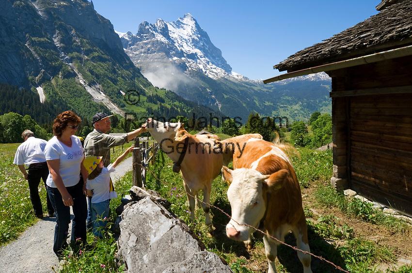 CHE, Schweiz, Kanton Bern, Berner Oberland, Grindelwald: Wanderer und Kuehe oberhalb von Grindelwald vorm Eiger | CHE, Switzerland, Bern Canton, Bernese Oberland, Grindelwald: hikers and cattle above Grindelwald with Eiger north face