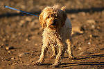 Wet scruffy dog on beach with strong cross light