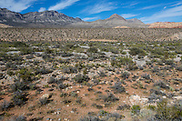 Red Rock Canyon, Nevada.  Red Rock Wash, an Arroyo, a Dry Creek Bed or Gully.  The Gray Limestone  Keystone Thrust is in background, La Madre Mountain on left, Turtlehead Peak on right.
