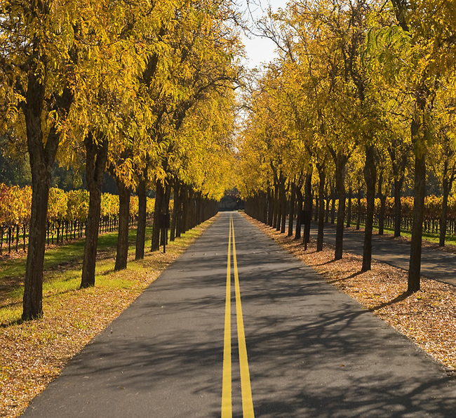 Road in Napa Valley vineyard