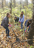 Students worked at removing invasive species of plants at Cool Creek Park in Westfield.  (L-R) Erica Huncklen, Kelly Igo, Maya DeCraene and Olivia Comao