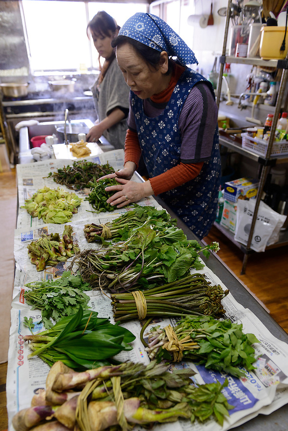 Freshly harvested mountain vegetables being prepared at the Ashiya guesthouse. Tsuruoka, Yamagata Prefecture, Japan, April 9, 2016. The city of Tsuruoka in Yamagata Prefecture is famous for its sansai mountain vegetable cuisine. These foraged grasses, fungi and vegetables are also used by the mountain ascetics of the Shugendo religion.