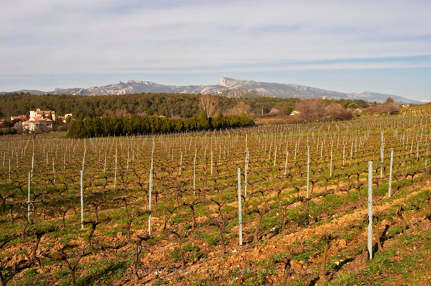 Vineyard and mountain Château Barbanau and Clos Val-Bruyere Cassis Cote d'Azur Var France