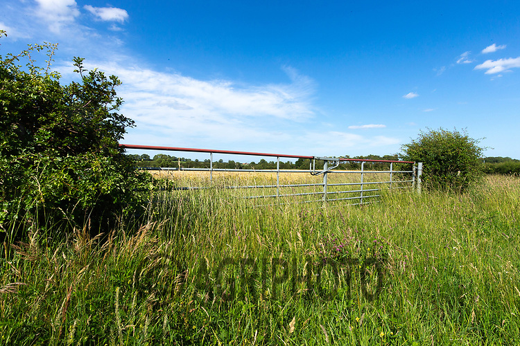 22.6.2020 Field gateway <br /> ©Tim Scrivener Photographer 07850 303986<br />      ....Covering Agriculture In The UK.