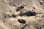 Rhea Track
