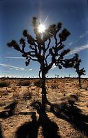 joshua tree 2012