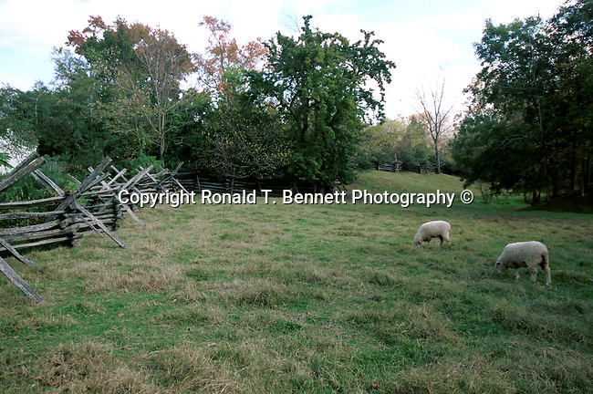 Sheep pasture with split rail fence Williamsburg Virginia, Fine Art Photography by Ron Bennett, Fine Art, Fine Art photography, Art Photography, Copyright RonBennettPhotography.com ©