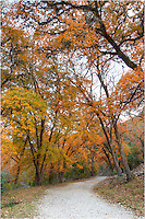 This image of the East Trail in Lost Maples State Park was taken with a vertical orientation to show the colors of the maples reaching high into the sky.
