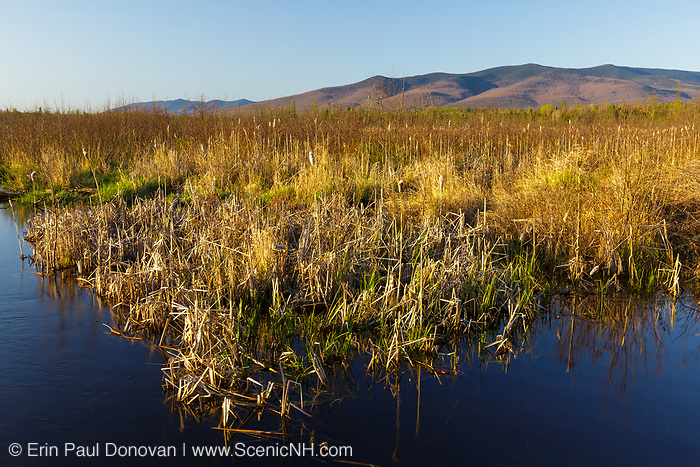 Wetlands along the Presidential Range Rail Trail (Cohos Trail) at Pondicherry Wildlife Refuge in Jefferson, New Hampshire during the spring months.