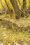 Small stream running through aspen and cottonwoods in the fall, Inyo National Forest, California